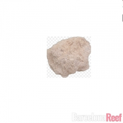 MarinePure, ROCK (Medium) para acuario marino | Barcelona Reef