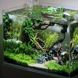 Abonos para plantas