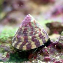 Caracoles y moluscos