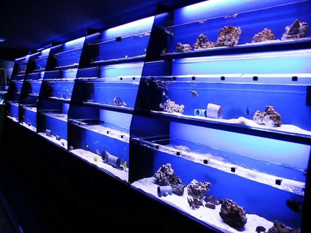 Tienda de Barcelona Reef