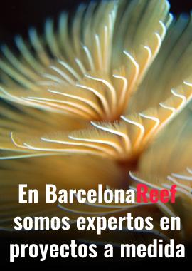 Banner Acuarios marinos a medida en Barcelona Reef