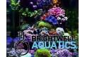 Acuarios marinos pequeños o nano sin complicaciones utilizando Brightwell Aquatics