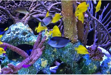 Cuánto tiempo lleva el mantenimiento de un acuario marino