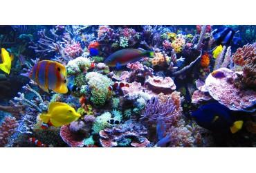 ¿Cuál es la diferencia entre un acuario de agua dulce y uno marino?